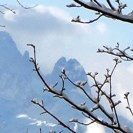 snow on trees & mountains