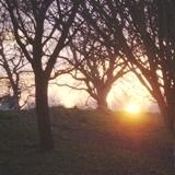 09.01.08  sunset & trees 021aa 160x160