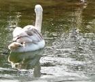 10.03.21 Cygnet Sefton Park Spring Equinox